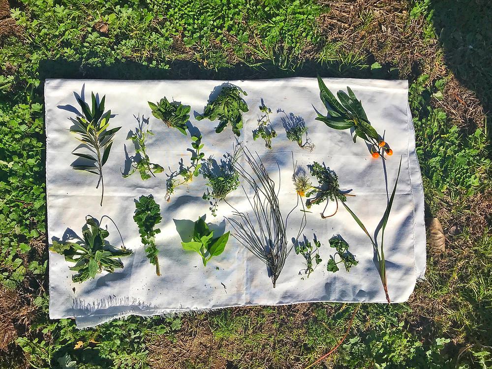 forage-workshop-inner-west-sydney-diego-bonetto-clovarcreative-weeds-plants