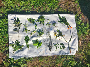 Forage for wild weeds in Sydney's Inner-West