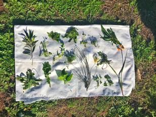 Forage for wild weeds in Sydney's Inner-West
