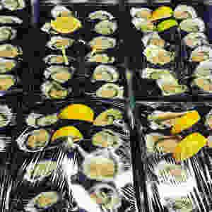 clovar-creative-south-coast-nsw-roadtrip-oyster-shed-batemans-bay-oysters