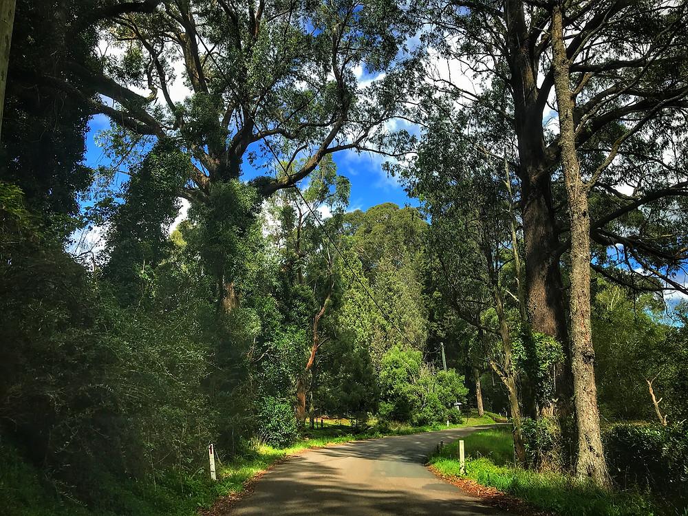 clovar-creative-robertson-burrawang-southern-highlands-road-trip-Burrawang-drive