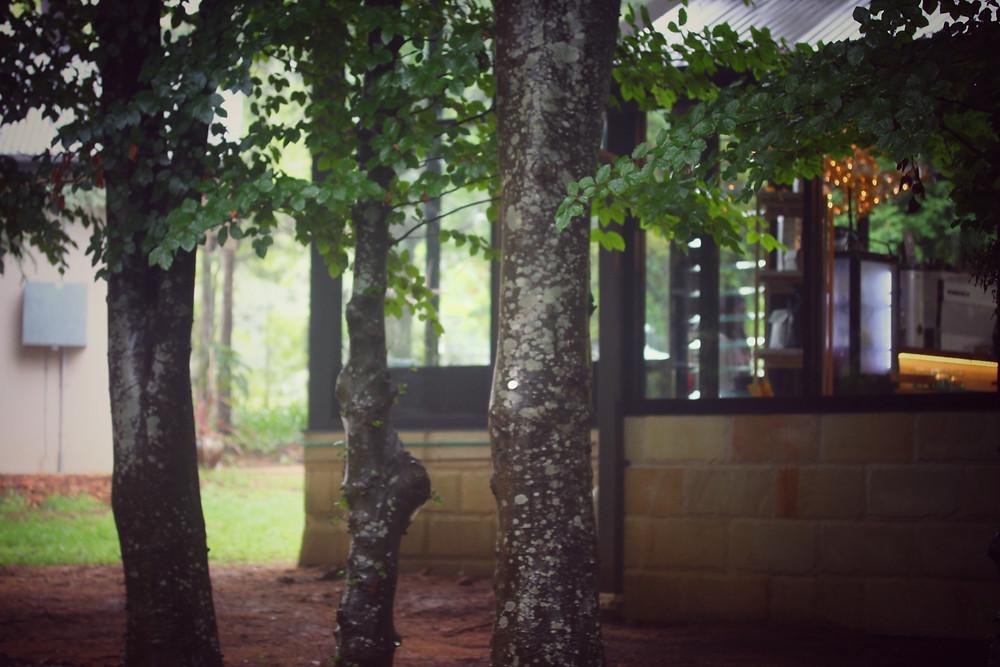 Clovar-creative-sorensen-glasshouse-and-garden-leura-garden-fairy-lights