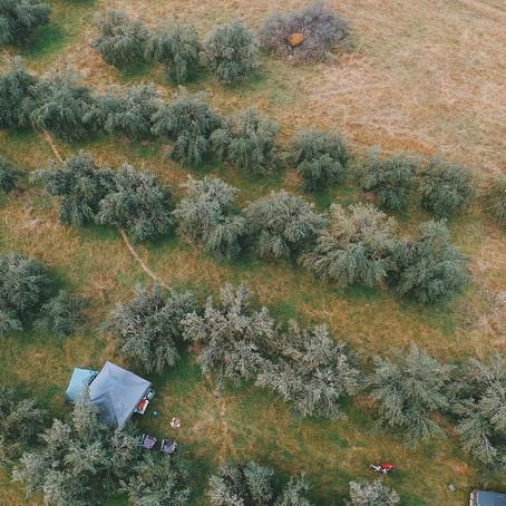 camping at Kirwin Farmstay- Mudgee