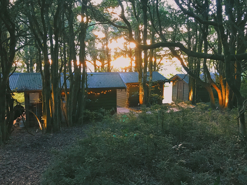 clovar-creative-kangaloon-southern-highlands-NSW-what-to-do-forest-view
