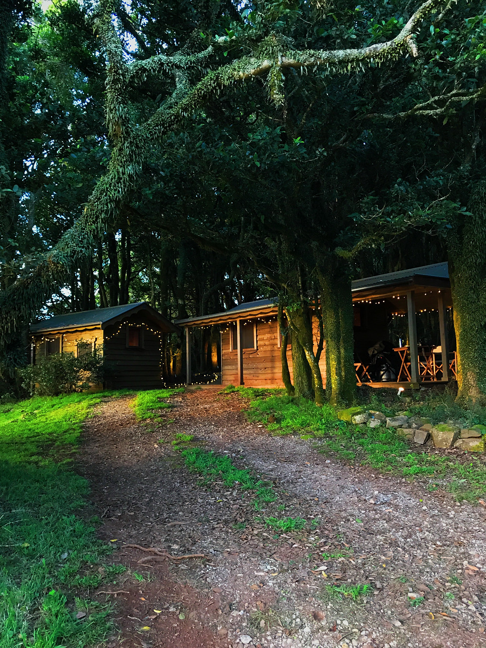 clovar-creative-kangaloon-southern-highlands-NSW-what-to-do-forest