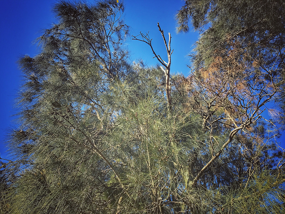 forage-workshop-inner-west-sydney-diego-bonetto-clovarcreative-she-oak