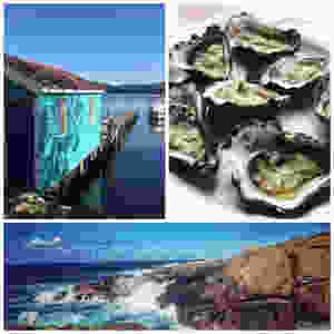 clover-creative-narooma-seafood-gourmet-adventures-oysters-montague-island