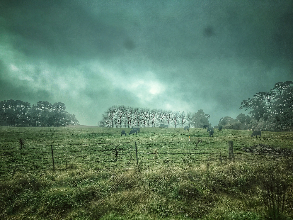 clovar-creative-robertson-burrawang-southern-highlands-road-trip-farms-burrawang