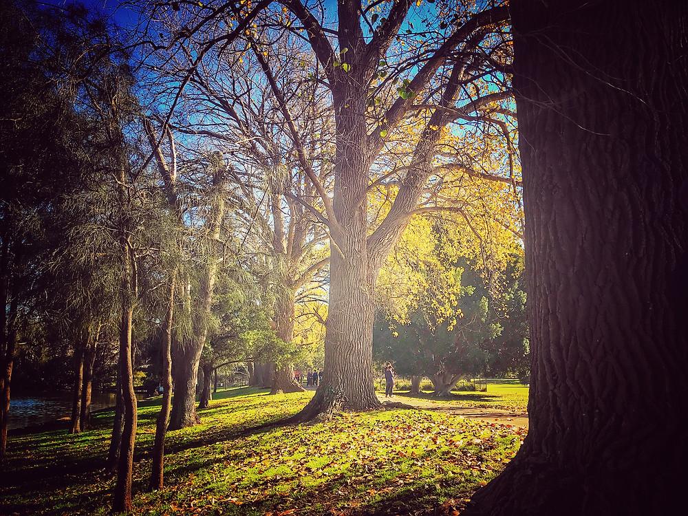 forage-workshop-inner-west-sydney-diego-bonetto-clovarcreative-poplar-trees