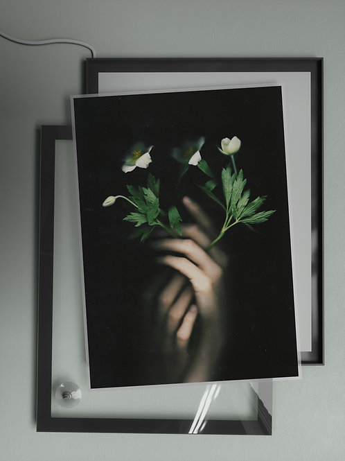 Anemone | Film Insert