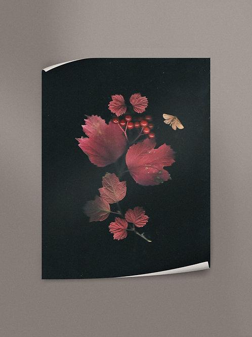 Autumn blush on the viburnum leaves | Poster