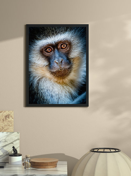 Vervet Monkey Portrait | Framed Poster