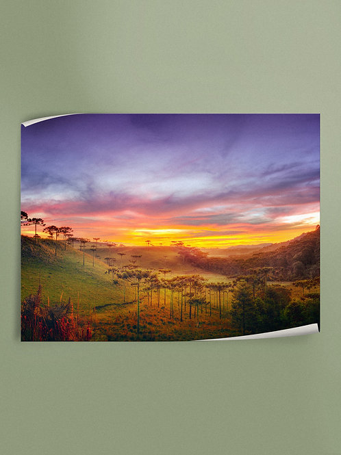 Araucaria Valley | Poster