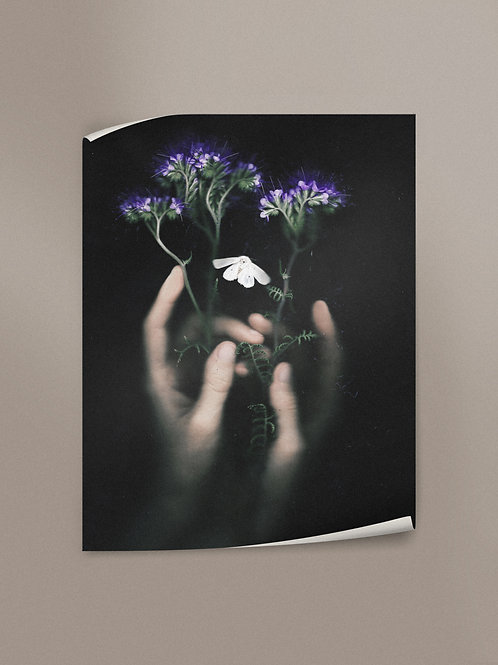 Phacelia | Poster
