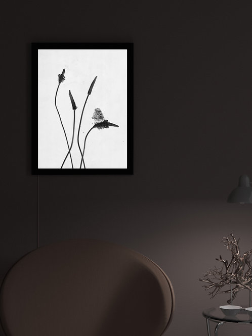 Silent lullabies of dusty herbs | Lightbox