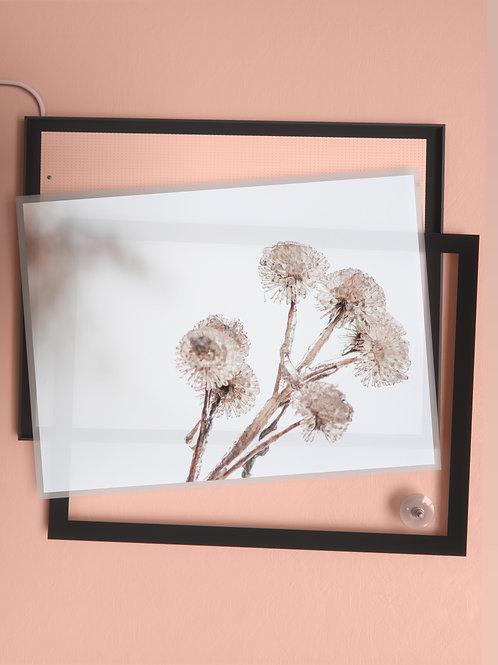 Winter Bouquet | Film Insert