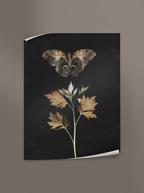 Fragile Autumn Wings | Poster