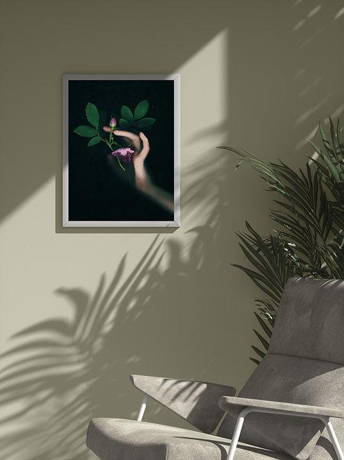 Eglantine   Framed Poster