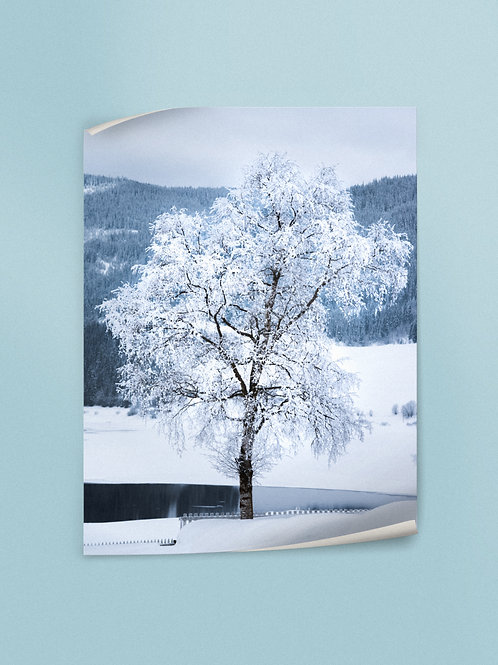 Frozen Tree | Poster