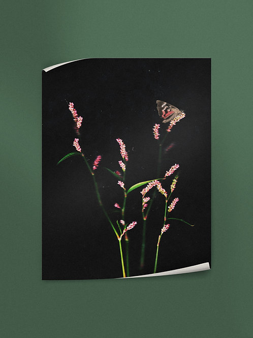 Flower blush and timid moth | Poster