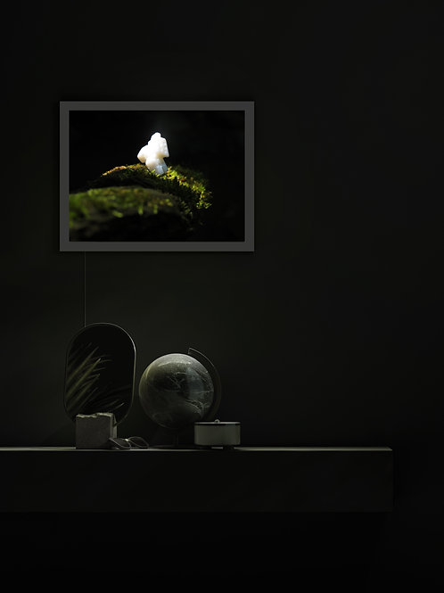Coisas que se encontram | Lightbox
