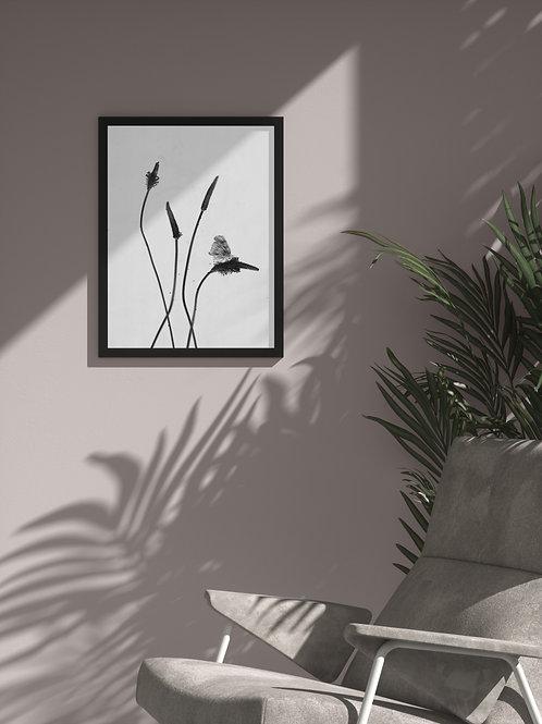 Silent lullabies of dusty herbs | Framed Poster