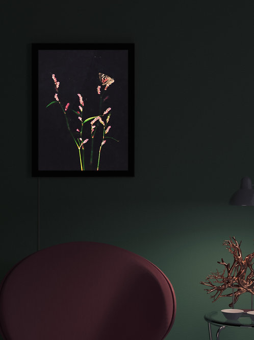 Flower blush and timid moth | Lightbox
