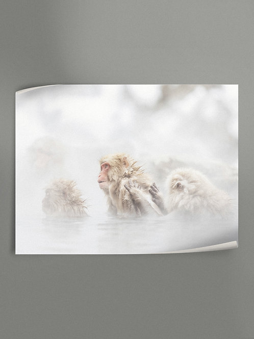 snow monkeys | Poster