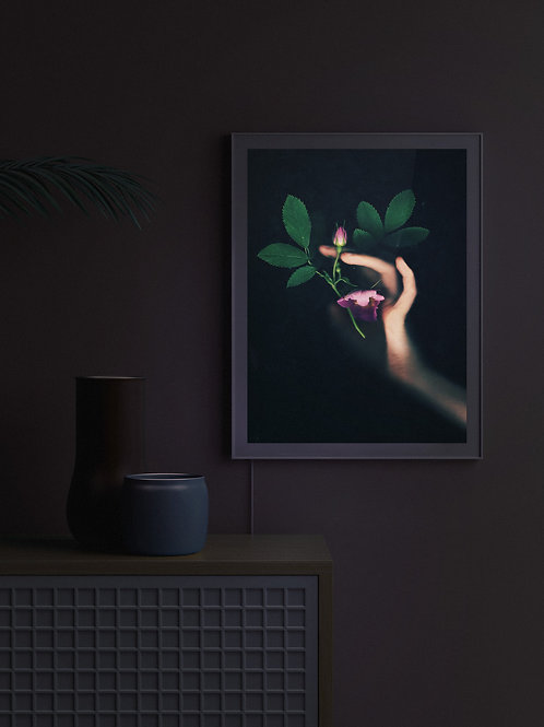 Eglantine   Lightbox