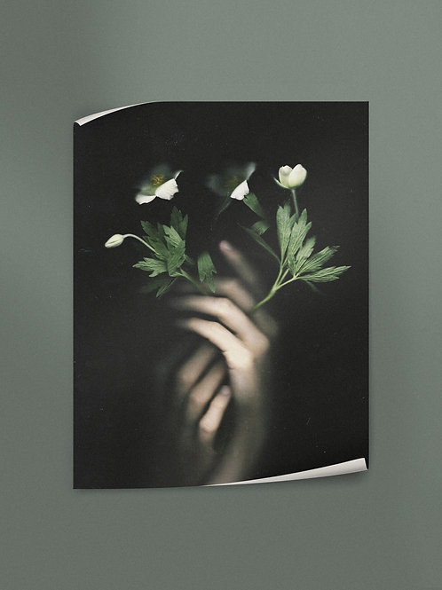 Anemone | Poster