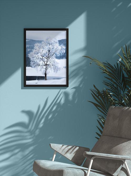 Frozen Tree   Framed Poster