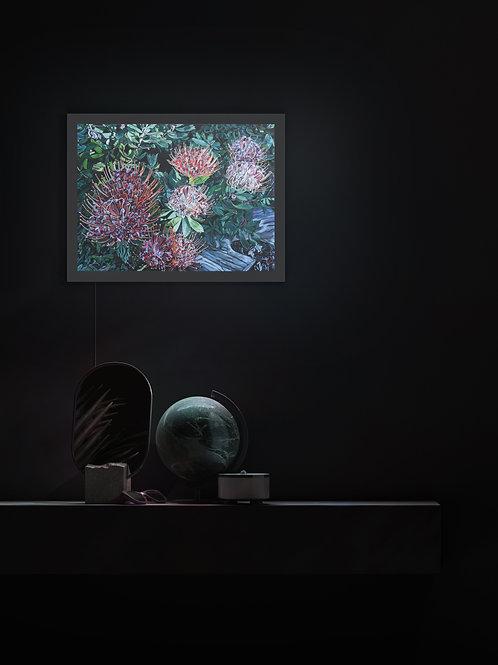 Protea | Lightbox