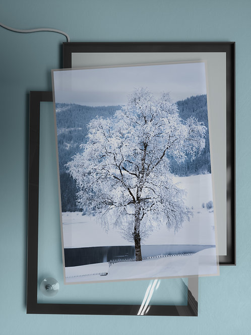 Frozen Tree   Film Insert
