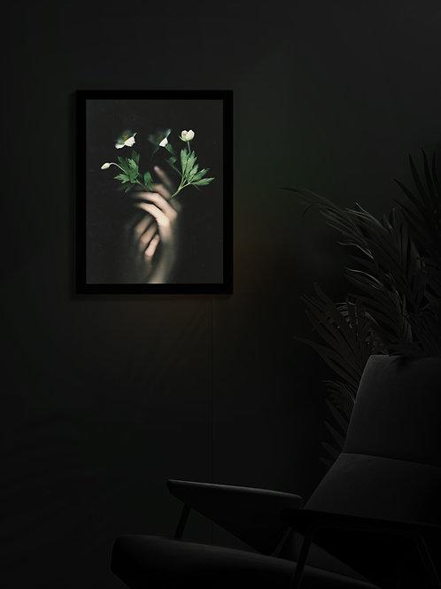 Anemone | Lightbox