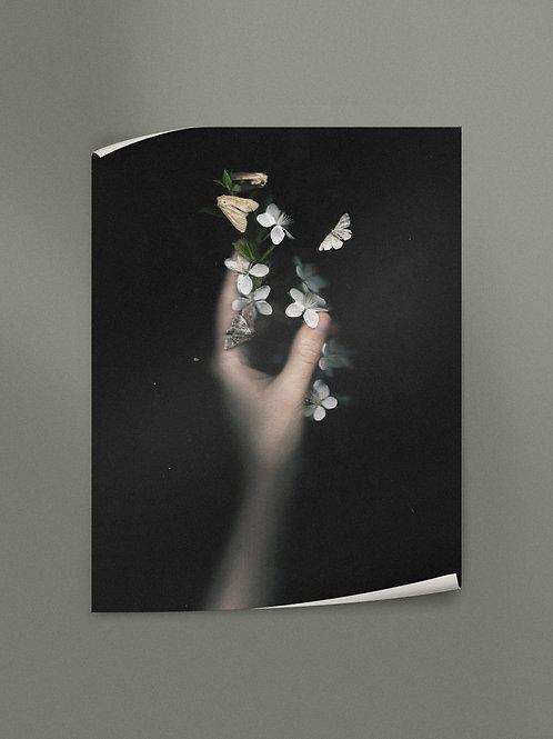 Cherry Blossom | Poster
