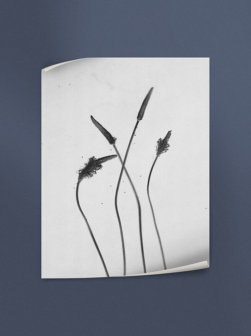 Silent lullabies of dusty herbs 2 | Poster