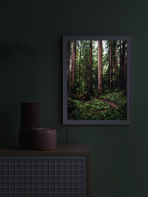 Endor | Lightbox