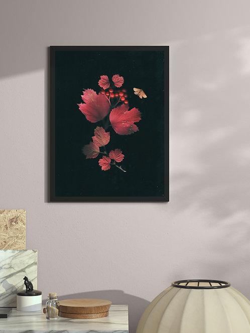 Autumn blush on the viburnum leaves   Framed Poster