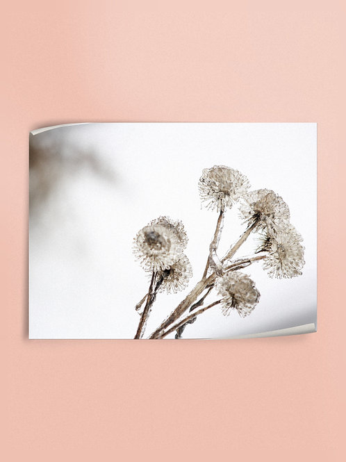 Winter Bouquet | Poster