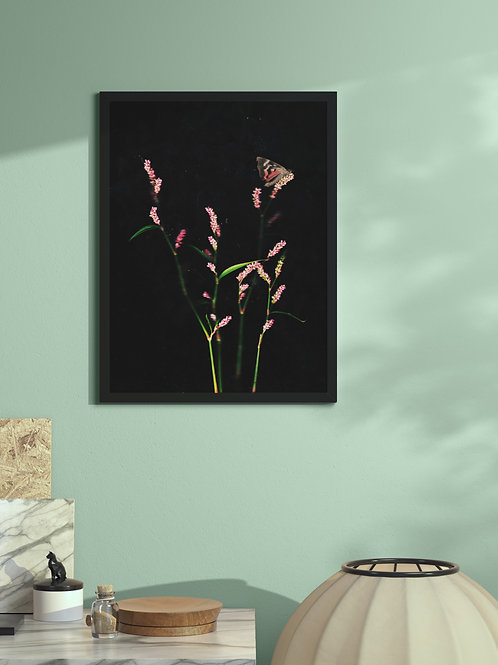 Flower blush and timid moth | Framed Poster