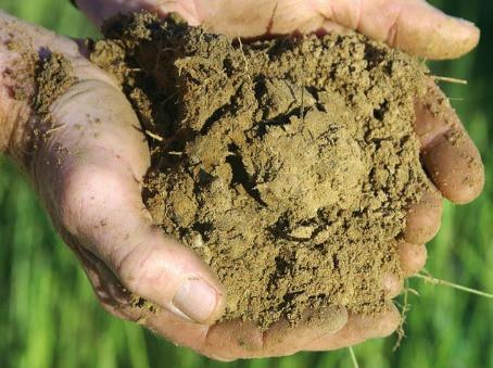 EARTHCHAT: Regenerative farming and gardening, healthy soil