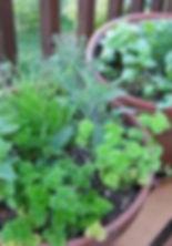 herbbowl3.jpg