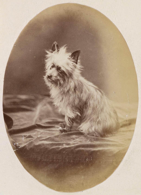 Mite, dog belonging to Queen Victoria