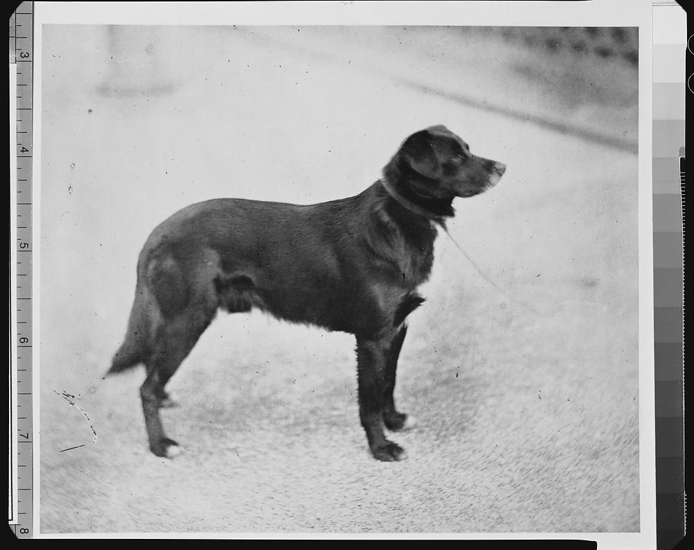Queen Victoria's favourite border collie dog 'sharp'