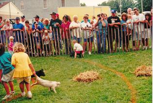Pig Catch, Janesville Days, 1994