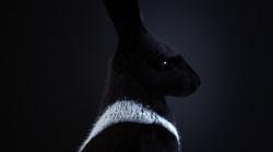 PandorasBox-RonWeaver-2017_Rabbit1