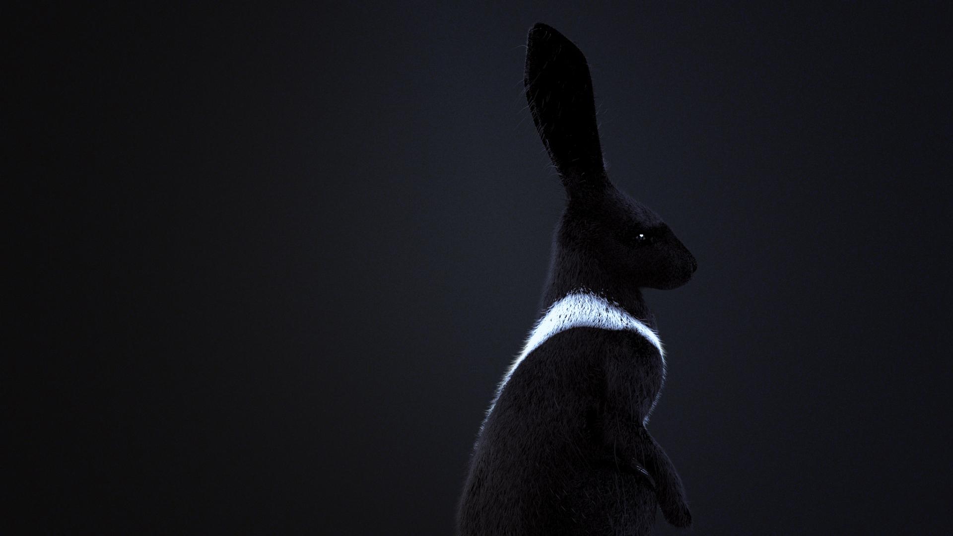 PandorasBox-RonWeaver-2017_Rabbit3