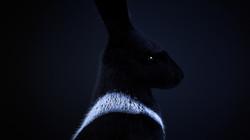 PandorasBox-RonWeaver-2017_Rabbit1Blue