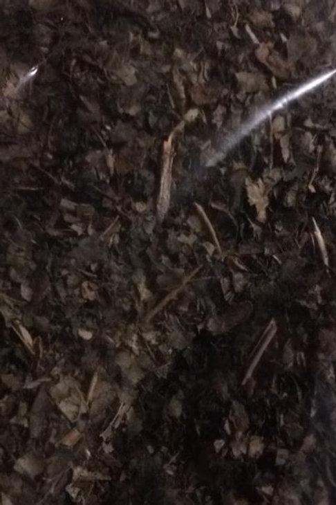 Organic Witch Hazel Leaf Herb