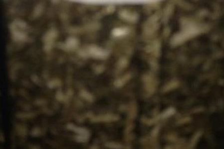 Organic Echinacea Herb Root
